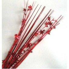 Stars Red P1